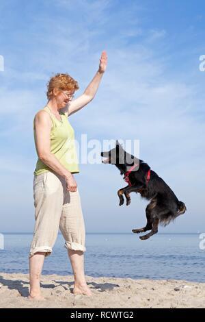 Portrait chien aller sur la plage, Kühlungsborn, Mecklembourg-Poméranie-Occidentale Banque D'Images