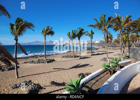Plage de Puerto del Carmen à Lanzarote, îles canaries, espagne. bleu de la mer, des palmiers, selective focus
