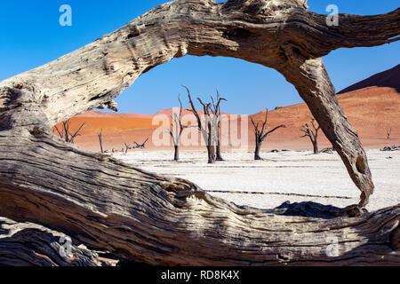 Deadvlei Paysage de Namib-Naukluft National Park, Namibie, Afrique Banque D'Images
