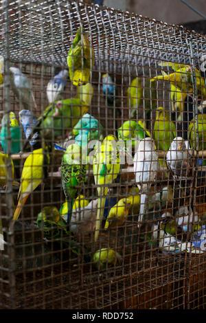 Plusieurs détenus emprisonnés dans une petite cage Banque D'Images