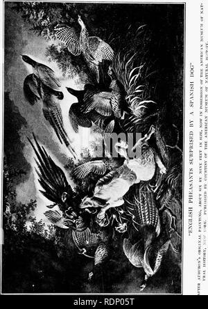 . Audubon, le naturaliste; une histoire de sa vie et le temps. Audubon, John James, 1785-1851; ornithologues. . Veuillez noter que ces images sont extraites de la page numérisée des images qui peuvent avoir été retouchées numériquement pour plus de lisibilité - coloration et l'aspect de ces illustrations ne peut pas parfaitement ressembler à l'œuvre originale.. Herrick, Francis Hobart, 1858-1940. New York, Londres, D. Appleton