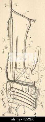 . Un cours d'instruction en zootomy (vertébrés). Anatomie, comparatif. La COD. 117. Veuillez noter que ces images sont extraites de la page numérisée des images qui peuvent avoir été retouchées numériquement pour plus de lisibilité - coloration et l'aspect de ces illustrations ne peut pas parfaitement ressembler à l'œuvre originale.. Parker, T. Jeffery (Thomas Jeffery), 1850-1897. Londres, Macmillan