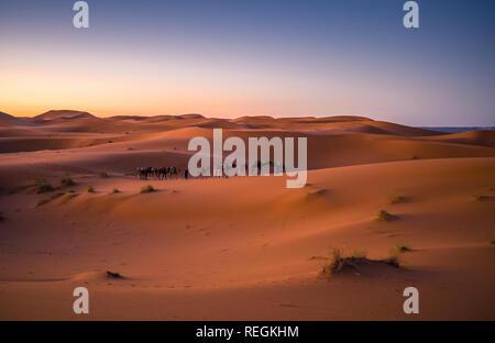 Les touristes chameaux pendant le lever du soleil dans le célèbre désert de Merzouga (Sahara), Maroc Banque D'Images