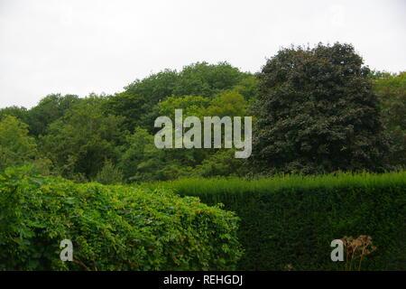 Hembury Woods en été, le feuillage de l'abbaye de Buckfast, Dartmoor National Park, Devon, UK. Banque D'Images