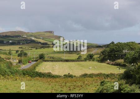 Donegal Irlande rurale. Moutons dans le champ Port Camargue et le comté de Donegal campagne sur la péninsule de Fanad. Banque D'Images