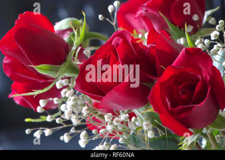 Bouquet de roses rouges et gypsophile blanc. Banque D'Images