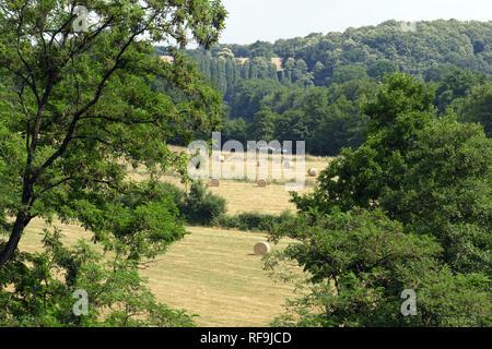 Campagne boisée paysage en été, foin dans les prés (Nord Mayenne, Pays de la Loire, France, Europe). Banque D'Images
