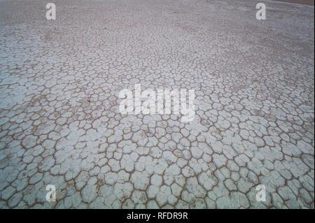Arbres morts dans Deadvlei, Namib-Naukluft National Park, la Namibie, la casserole une fois avait l'eau de la rivière Tsauchab, mais l'évolution de l'environnement cause de sécher Banque D'Images