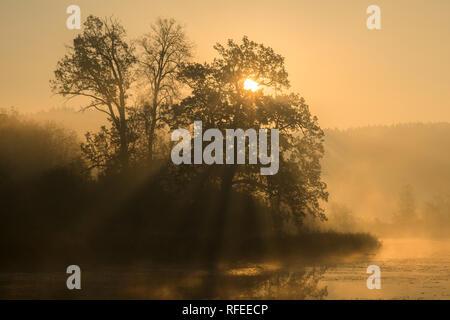 Silhouettes d'arbres dans un brouillard brumeux matin avec les rayons du soleil à travers les branches des arbres sur la rive du lac en Europe. Belle ambiance sur autu Banque D'Images