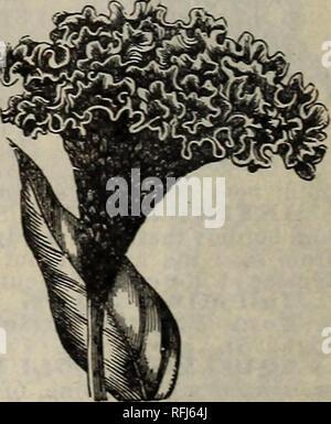 . Vingtième catalogue annuel: printemps 1900. Pépinière Indiana Indianapolis catalogues; catalogues; Graines de légumes graines de fleurs; instruments agricoles Catalogues Catalogues. . Veuillez noter que ces images sont extraites de la page numérisée des images qui peuvent avoir été retouchées numériquement pour plus de lisibilité - coloration et l'aspect de ces illustrations ne peut pas parfaitement ressembler à l'œuvre originale.. Page d'Huntington et Huntington, J.; T; Page, T. V; Henry G. Gilbert Pépinière et du commerce de semences Catalogue Collection. Indianapolis, Ind.: Huntington et Page