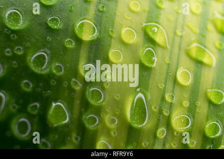 Gros plan d'un shot de gouttes d'eau sur une feuille Banque D'Images