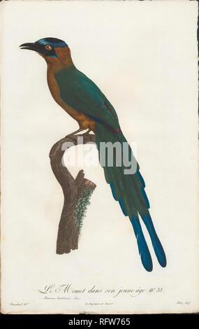 Sharpes Oiseaux de paradis 1890, le Момот dans sa jeunesse.jpg - DD765 Banque D'Images