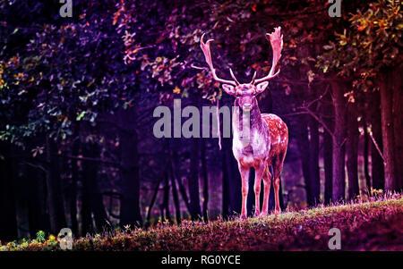 Multihued urbain Deer.jpg - RG0YCE Banque D'Images