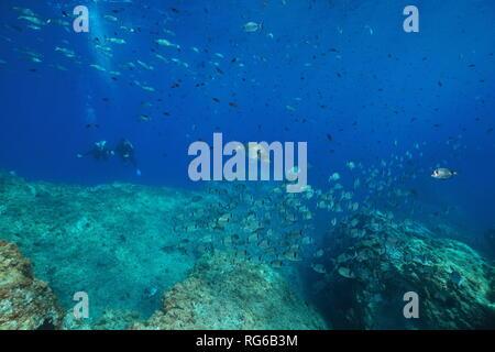 L'école sous-marine de poissons dans la mer Méditerranée avec les plongeurs en arrière-plan, France, réserve marine de Banyuls, Cerbère Pyrénées-orientales Banque D'Images