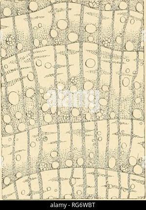 . Bullettino del Laboratorio de orto botanico. Les plantes; les plantes -- Italie Sienne. 178 L. PICCIOLI. Veuillez noter que ces images sont extraites de la page numérisée des images qui peuvent avoir été retouchées numériquement pour plus de lisibilité - coloration et l'aspect de ces illustrations ne peut pas parfaitement ressembler à l'œuvre originale.. R. Université de Sienne; R. Université de Sienne. Istituto botanico; R. Université de Sienne. Laboratorio botanico; R. Université de Sienne. Orto botanico; Tassi, Flaminio, b. 1851. Siena: L. Lazzeri Banque D'Images