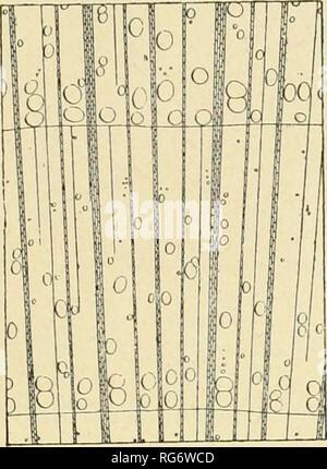 . Bullettino del Laboratorio de orto botanico. Les plantes; les plantes -- Italie Sienne. Encodage DEI SRL 177. Veuillez noter que ces images sont extraites de la page numérisée des images qui peuvent avoir été retouchées numériquement pour plus de lisibilité - coloration et l'aspect de ces illustrations ne peut pas parfaitement ressembler à l'œuvre originale.. R. Université de Sienne; R. Université de Sienne. Istituto botanico; R. Université de Sienne. Laboratorio botanico; R. Université de Sienne. Orto botanico; Tassi, Flaminio, b. 1851. Siena: L. Lazzeri Banque D'Images