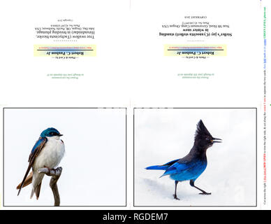42 897,03884-b & 43 160,09772 Note photo photographie, deux cartes 5x4 à l'horizontale sur un papier d'impression (11x8,5 couper fois), d'oiseaux hirondelles & geai de Steller Banque D'Images