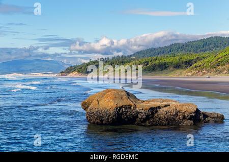 Plage de l'océan 43 362,02366 seascape paysage vert forêt de conifères du littoral, Boulder dans l'eau avec l'Ouest mouette oiseau debout sur l'eau, ciel bleu