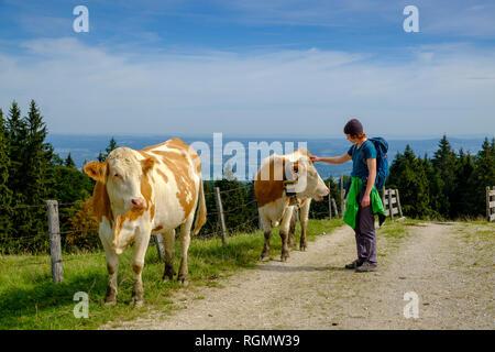L'Allemagne, la Haute-Bavière, Chiemgau, Jeune randonneur caressant sur un pâturage de vaches