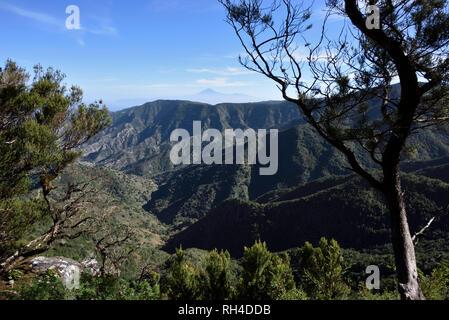 Les vertes collines du parc national de Garajonay et le sommet de la montagne Teide en arrière-plan, la Gomera, Canary Islands, Spain