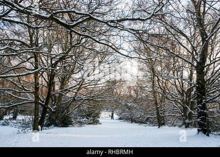 Arbres couverts de neige et de chemins dans des tons de rose la fin d'après-midi soleil d'hiver sur Hampstead Heath, Londres UK.
