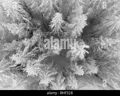 Vue aérienne de la forêt enneigée et congelé en hiver arbres blanc . Banque D'Images