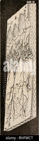 . BoletÃ-n de la Sociedad España±ola de Historia Natural. L'histoire naturelle. DE HISTORIA NATURAL 335. Veuillez noter que ces images sont extraites de la page numérisée des images qui peuvent avoir été retouchées numériquement pour plus de lisibilité - coloration et l'aspect de ces illustrations ne peut pas parfaitement ressembler à l'œuvre originale.. Sociedad España±ola de Historia Natural. Madrid: a. conseil. de Fortenet Banque D'Images
