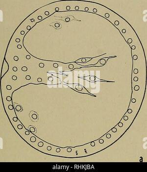 . Le bulletin biologique. Biologie; zoologie; biologie marine. Vitesse de DÉVELOPPEMENT ET LA TEMPÉRATURE 75 il est intéressant d'examiner la manière dont deux des formules communément em- tion monter nos données. Nous allons considérer d'abord l'équation d'Arrhénius qui a été largement appliquée par Crozier et ses col- laborators (1924-) pour divers processus biologiques, y compris le rythme de développement. Si le logarithme de la vitesse d'un processus particulier est comploté contre l'inverse de la température absolue, puis, selon l'équation d'Arrhénius, une ligne droite doit être prévu. Dans le grap