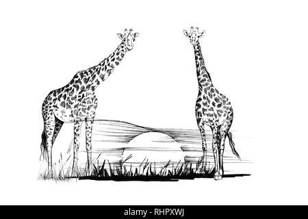 Deux girafes sur le coucher du soleil. Illustration à la main. Collection d'illustrations faites à la main (originaux, pas de traces) Banque D'Images