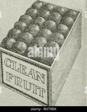 . Mieux les fruits. La culture de fruits. TQlS Page 23 FRUITS MIEUX ducert axillaires que sur les côtés de la tige. Dans certains des prunes japonaises, ces acquis beaucoup d'importance, la production d'une grande part des cultures en fleurs. Dans ces variétés, ils sont répartis le long de la direction d'une façon semblable à peach bourgeons. Dans les pêches, l'ensemble des bourgeons à fruits culture est produite sur le bois d'un an. Les bourgeons sont supportés à l'aisselle des feuilles, normalement en groupes de trois. Dans ce cas, celle du milieu est un bouton de la nouvelle feuille, tandis que les deux boutons de fleurs à l'extérieur sous forme de pièces. Si les pousses font une très vigoureuse, gr Banque D'Images