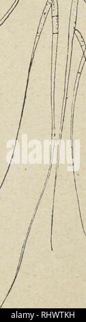 . Zur Kryptogamenflora Beitrge der Schweiz. . Veuillez noter que ces images sont extraites de la page numérisée des images qui peuvent avoir été retouchées numériquement pour plus de lisibilité - coloration et l'aspect de ces illustrations ne peut pas parfaitement ressembler à l'œuvre originale.. Schweizerische Botanische Gesellschaft; Schweizerische Naturforschende Gesellschaft. Bern: K. J. Wyss Banque D'Images