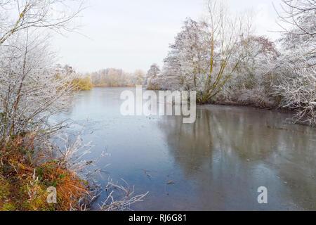Sur un matin brumeux, froid, à bas le long d'un lac gelé, bordés par des arbres couverts de givre