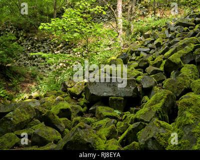 Deutschland, Bayern, Naturpark Bayrische Rhön Biosphärenreservat, UNESCO-Basaltprismenwand Gangolfsberg, suis, Naturschutzgebiet Lange Rhön