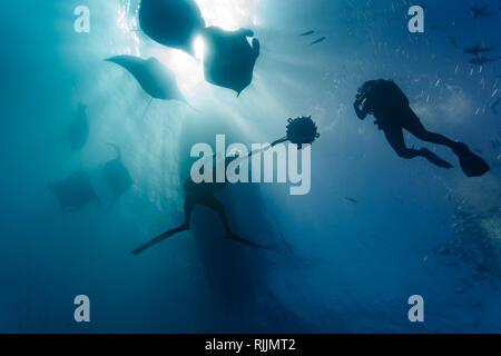 Équipe de plongée sous-marine photographie plusieurs raies manta géantes Banque D'Images