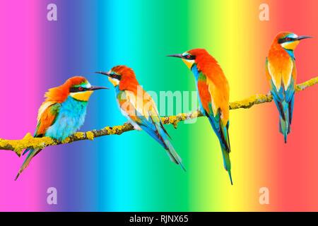 Les oiseaux de paradis s'asseoir sur l'arrière-plan de la rainbow background Banque D'Images
