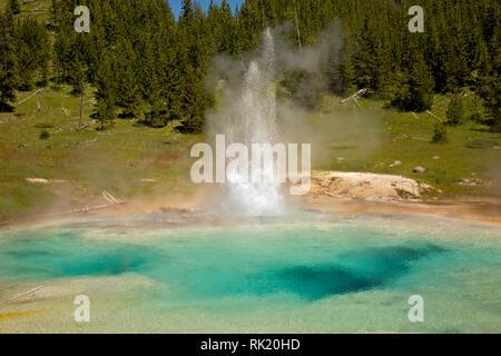 WY03396-00...WYOMING - Geyser Impériale situé dans le Midway Geyser Basin de Parc National de Yellowstone.