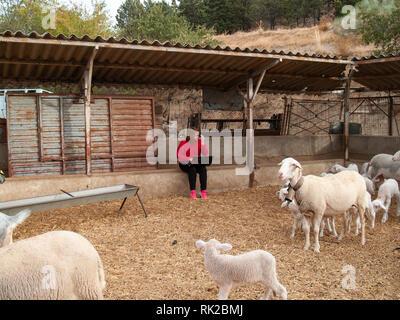 Un entrepreneur jeune femme travaillant à l'extérieur sur une ferme de moutons et d'agneaux avec un ordinateur portable Banque D'Images