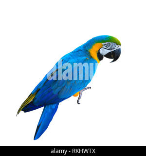Ara ararauna. Perroquet ara bleu-jaune. Isolé sur le livre blanc Banque D'Images