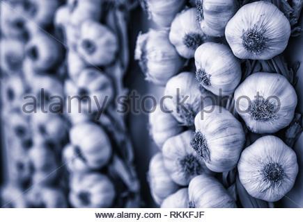 Récolte de l'ail dans un marché, ingrédient détail. Banque D'Images