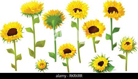 Fleurs de tournesol vecteur icônes mignonnes ensemble big Banque D'Images