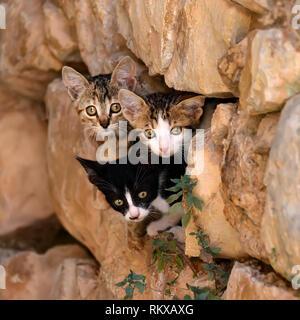 Trois chatons bébé curieux scrutant d'une cachette dans un mur rocheux trou avec des yeux indiscrets, Grèce Banque D'Images