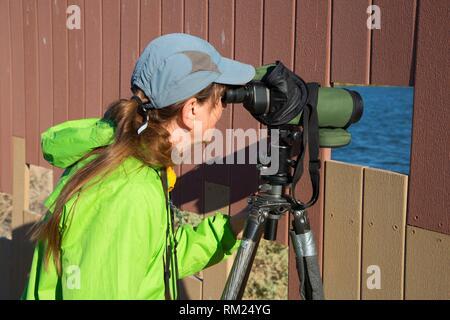 L'observation des oiseaux aveugles, Ville d'Henderson Bird Viewing Preserve, Nevada. Banque D'Images