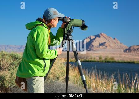 Birder avec lunette, Ville d'Henderson Bird Viewing Preserve, Nevada. Banque D'Images