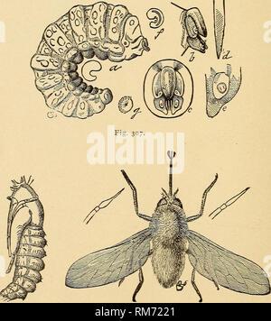 . Rapport annuel, y compris un rapport des insectes du New Jersey, 1909. Fig- 30:. Fig. 306. Fig. Antlirax hippomelas 305.-: une larve, pupe de mouche; b, projetant de cut-worm chrysalide; c, pupe; d, adulte: tous les grande. Fig. 306.-bee-fly, SystcccJius oreas, parasite de la sauterelle-pods, pupe et adulte. Fig. 307.-larve de Systccclms orcas agrandie et détails de structure.. Veuillez noter que ces images sont extraites de la page numérisée des images qui peuvent avoir été retouchées numériquement pour plus de lisibilité - coloration et l'aspect de ces illustrations ne peut pas parfaitement ressembler à l'œuvre originale.. New Jerse