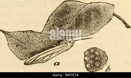 . Rapport annuel, y compris un rapport des insectes du New Jersey, 1909. Fig. 180. Fig. 179.--l'automne ver web, Hyphan- tria cunea: a, b, c, les variétés de larve; d, e, pupse; f, d'amphibien de la forme blanche normale. Fig. 180.-variétés dans l'aile de marquages de Hyphantria cunea. Fig. 181.-femelle Hyphantria pondre sur le dessous de la feuille; b, un petit groupe d'œufs, élargie.. Fig. li. Veuillez noter que ces images sont extraites de la page numérisée des images qui peuvent avoir été retouchées numériquement pour plus de lisibilité - coloration et l'aspect de ces illustrations ne peut pas parfaitement ressembler à l'œuvre originale.. Nouveau