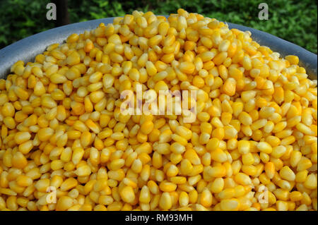 Maïs doux, Pune, Maharashtra, Inde, Asie Banque D'Images