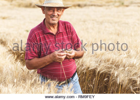 Hauts farmer standing dans un champ de blé l'examen de culture. Banque D'Images