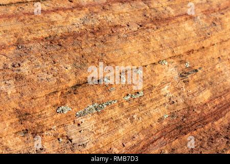 Libre. Vert et gris lichen sur les couches de grès rouge couverts, de motifs et de fissures. Formation de rock rouge naturel sud-ouest américain Banque D'Images