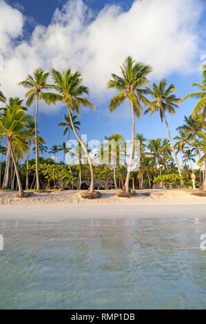 Des cocotiers on tropical beach près de Las Galeras, République Dominicaine Banque D'Images