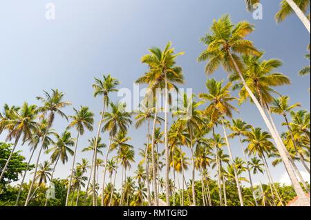 Palmiers sur la plage tropicale des Caraïbes Banque D'Images